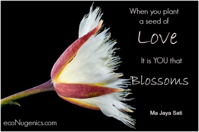 Seed of Love